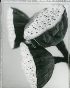 newbotanicals1.jpg